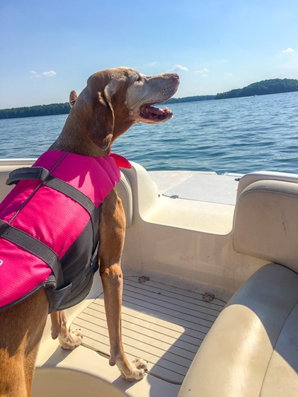 lake norman dog