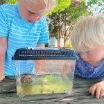 chase ryder tadpoles