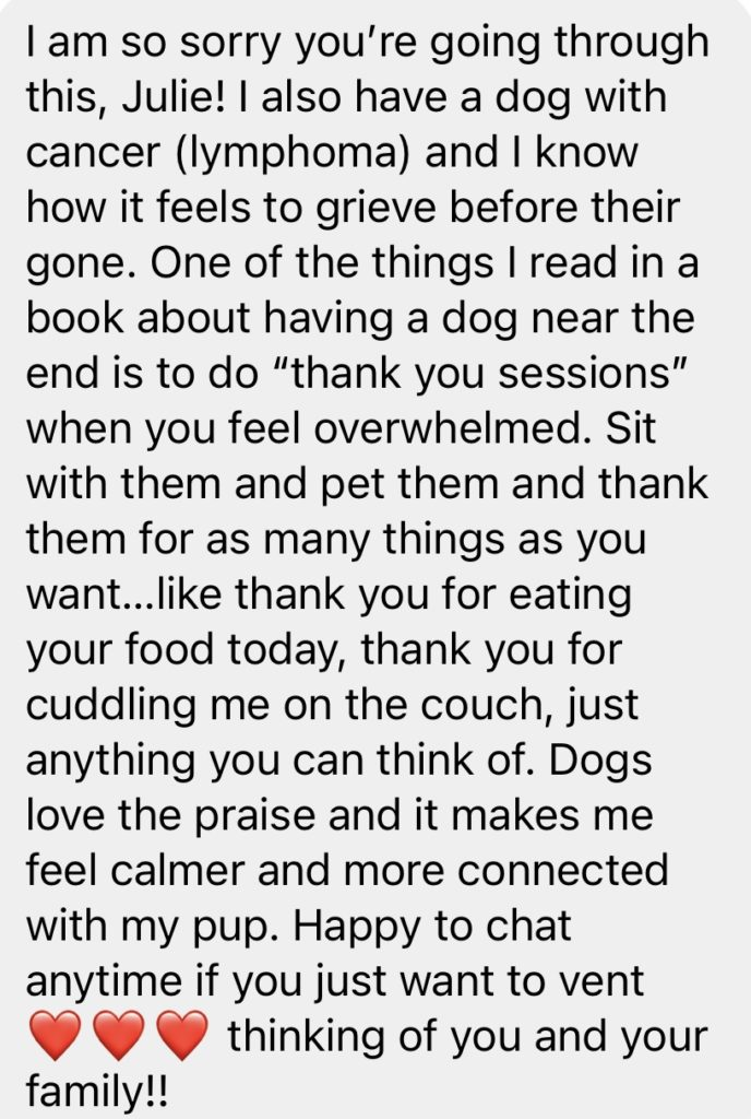 thank you sessions with dog